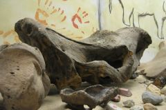 Część-wystawy-Mamuty-Nosorożce._