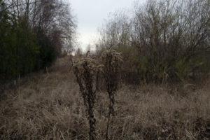 Zakopany krajobraz